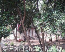 plot for sale in ariyur